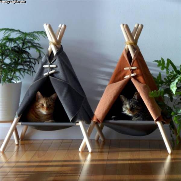 Teepee Cats