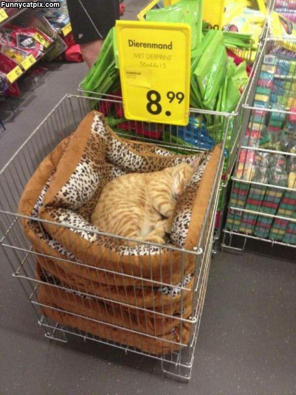 睡猫出售¥8.99 - 雪山 - .