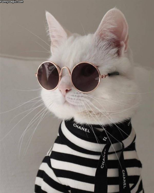 That Is A Cool Cat