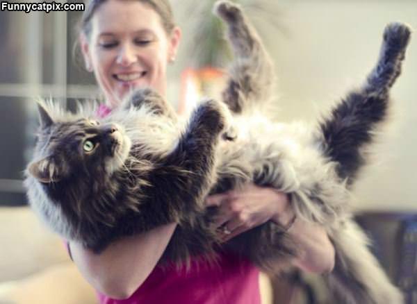 大只猫 - 雪山 - .