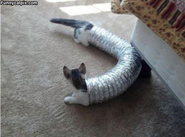 That Is A Long Cat