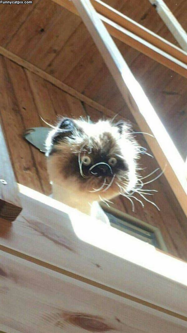 That Is A Scraggly Cat