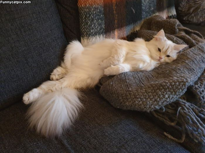 That Is A Very Relaxed Cat