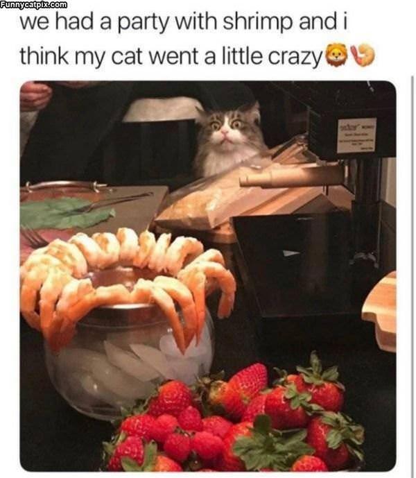 That Shrimp Looks Amazing