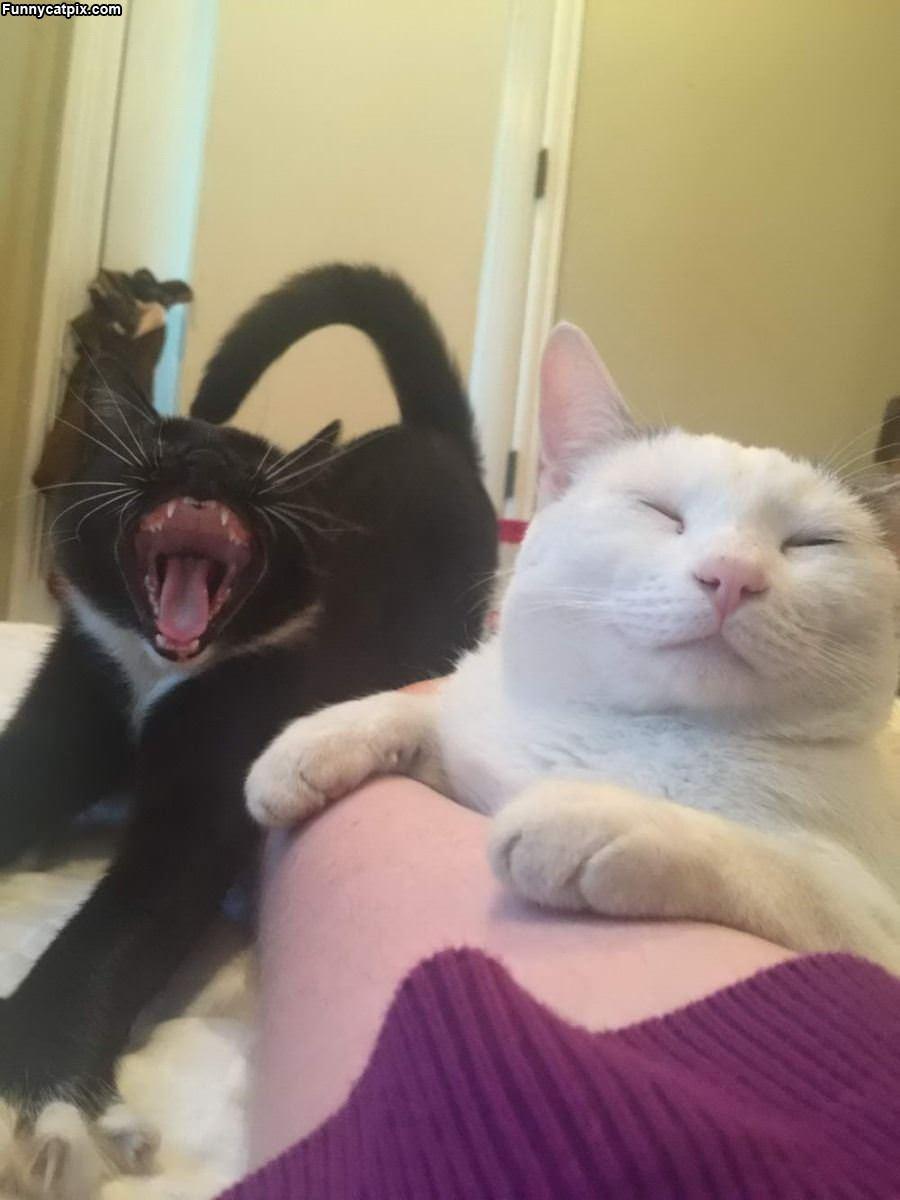 The Biggest Yawn