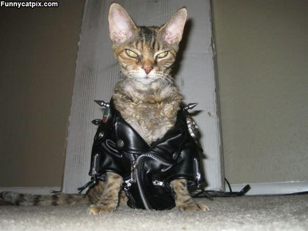 The Biker Cat