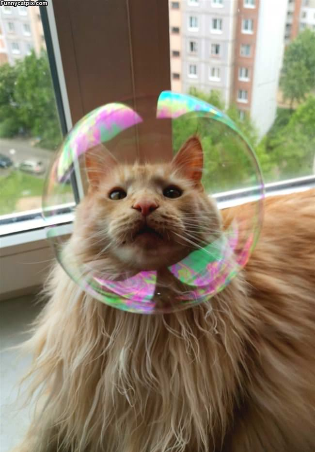 The Bubble Cat