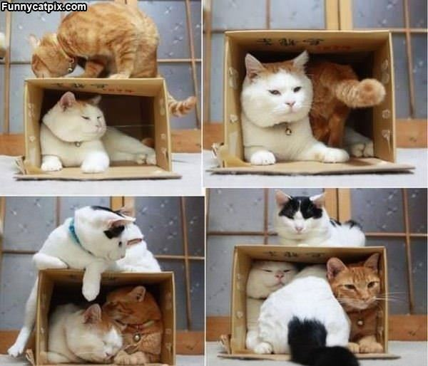 The Cat Boxes