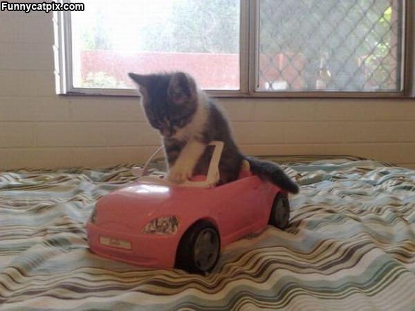 The Cat Car