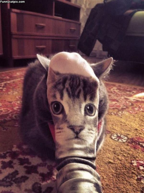 The Cat Facer