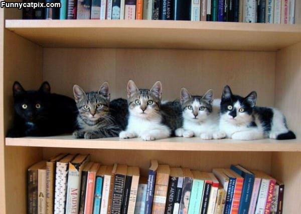 The Cat Helf