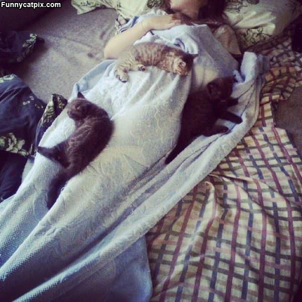 The Cat Nap
