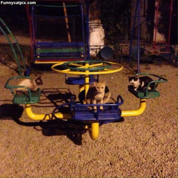 The Cat Playground