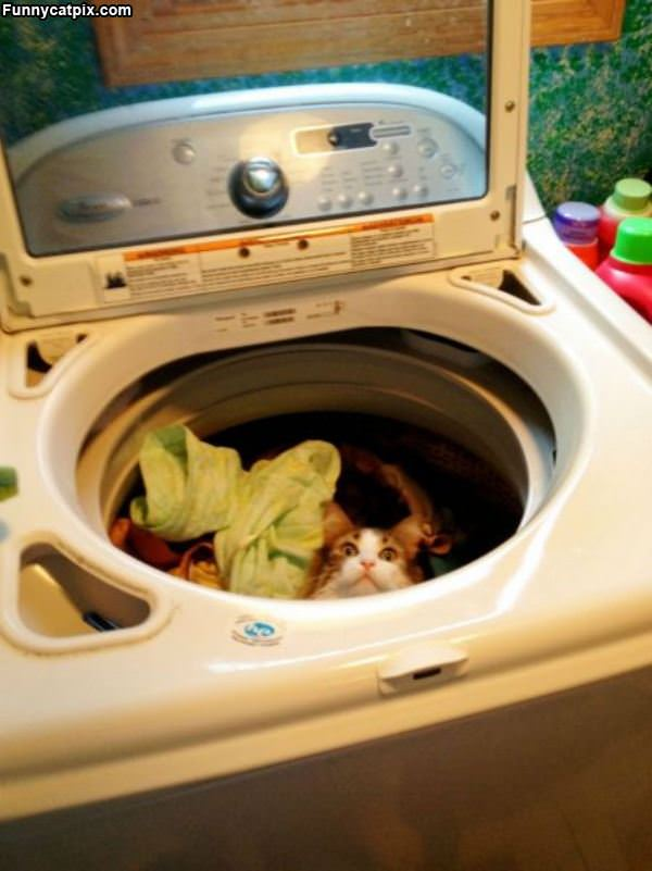 The Cat Washer
