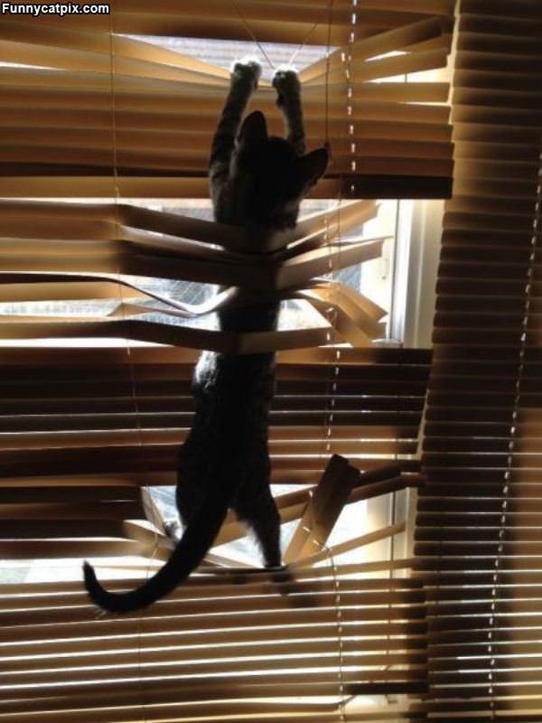 The Climbing Cat