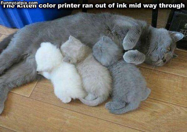 漂亮的猫仔颜色 - 雪山 - .