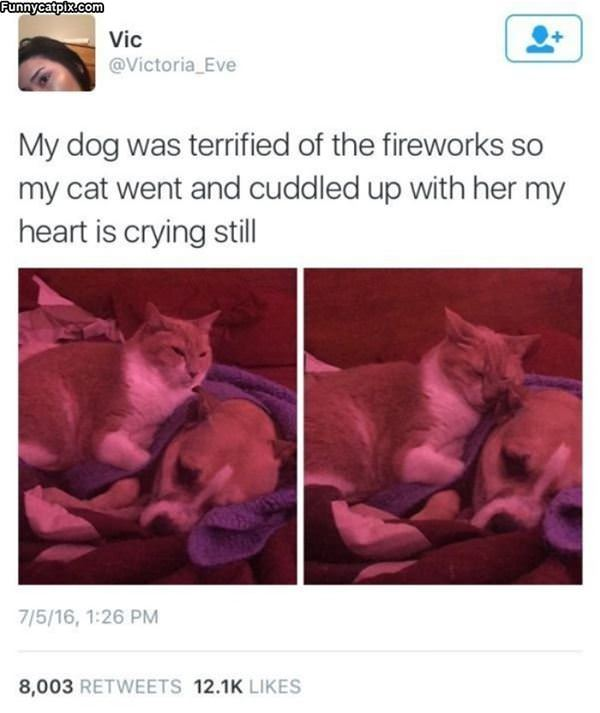 The Dog Was Scared