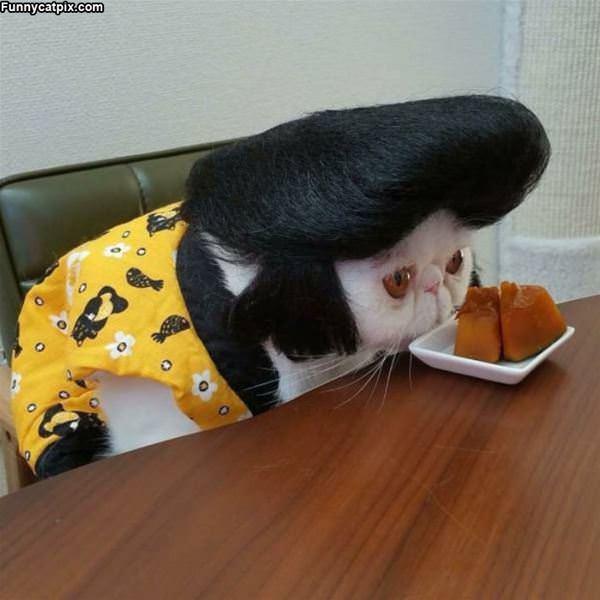 The Elvis Cat