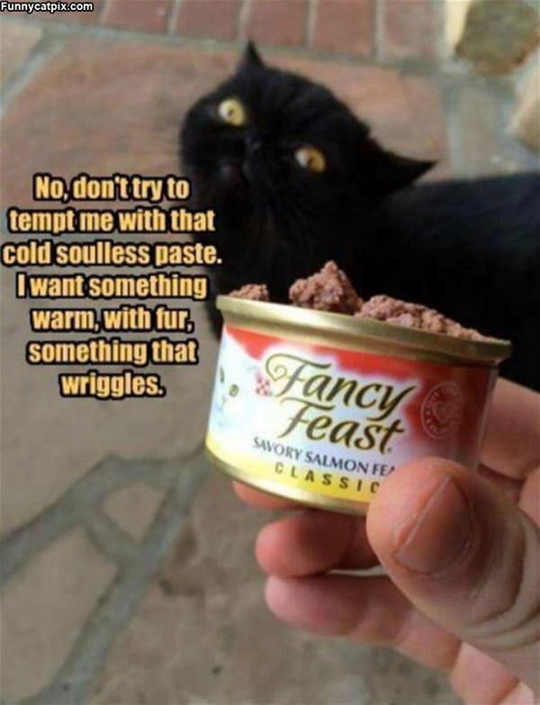 The Fancy Feast