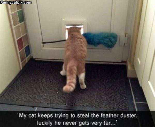 The Feather Duster