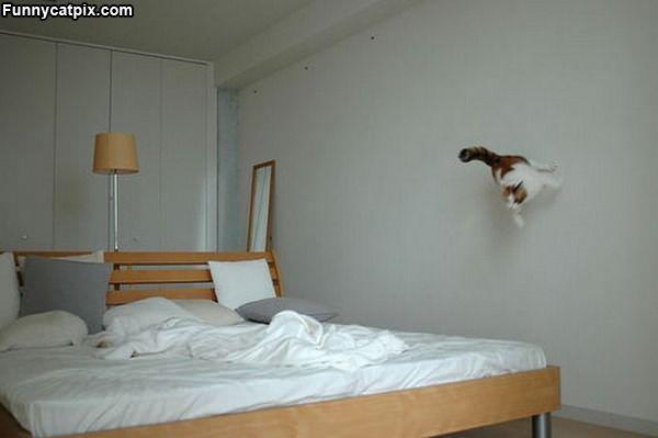 The Flying Ninja Cat