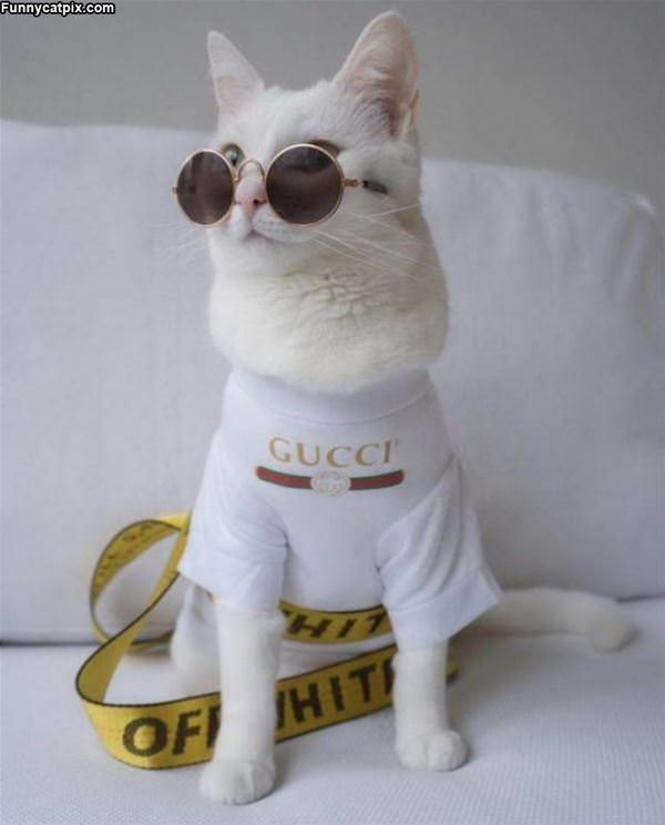 The Gucci Cat