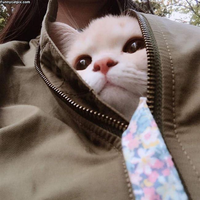 The Jacket Cat