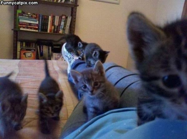 The Kitten Army Is Here