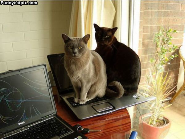 The Laptop Is Warm