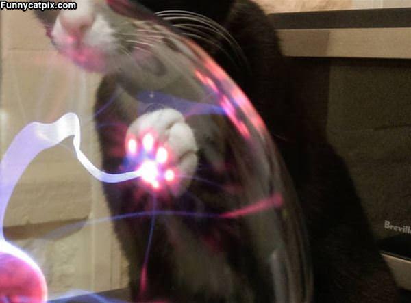 The Laser Cat