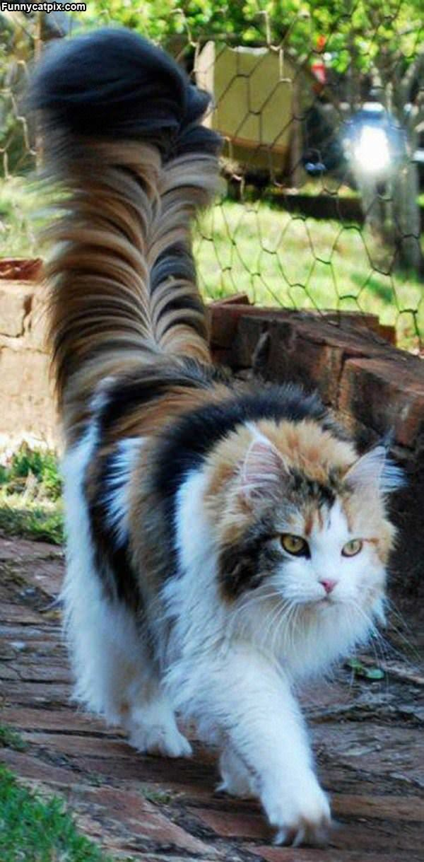 The Most Awesome Fluffy Cat