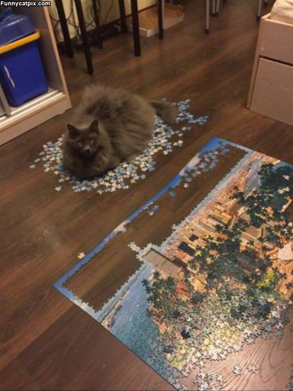 The Puzzled Cat