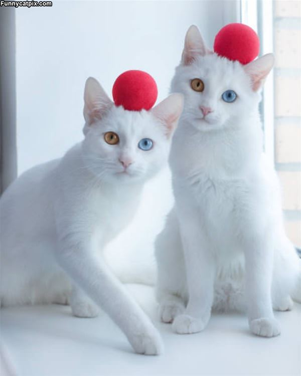 The Red Ball Cats
