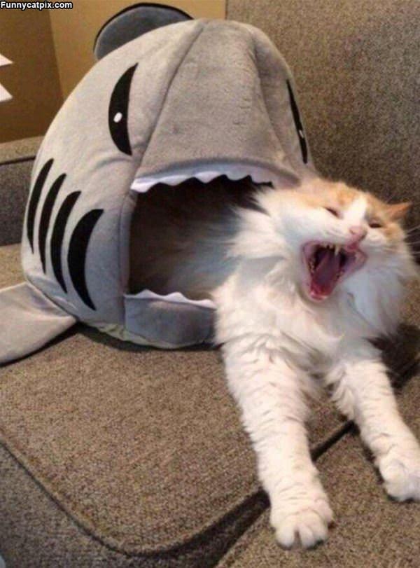 The Shark Got Me