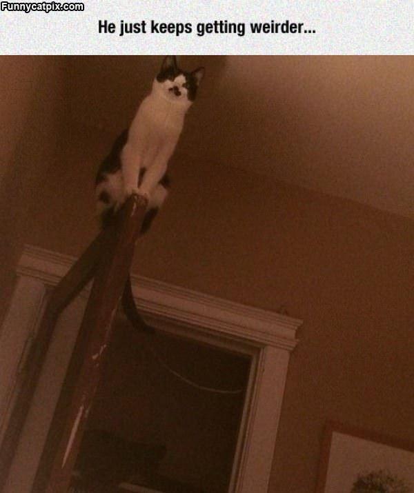 The Weird Cat