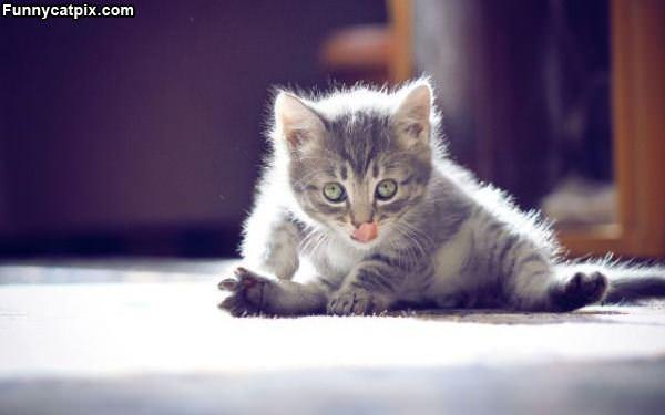 The Yoga Kitten