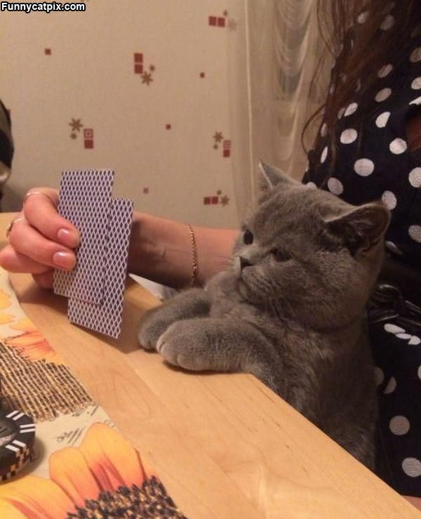 These Cards Are Terrible