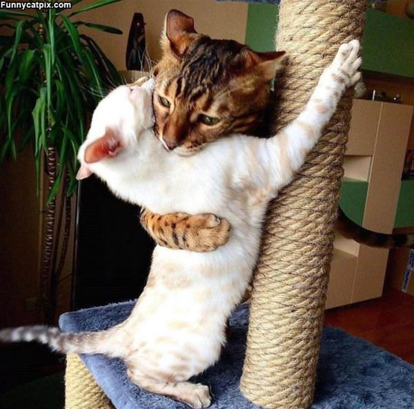 These Cats Love Hugs