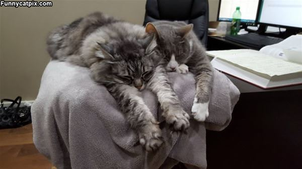 These Cats Love Relaxing