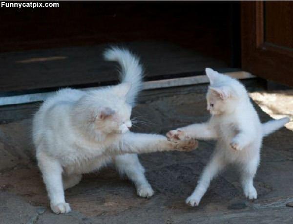 These Ninja Cats