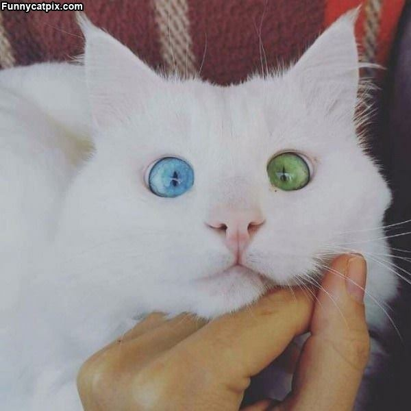 This Cat Has Awesome Eyes