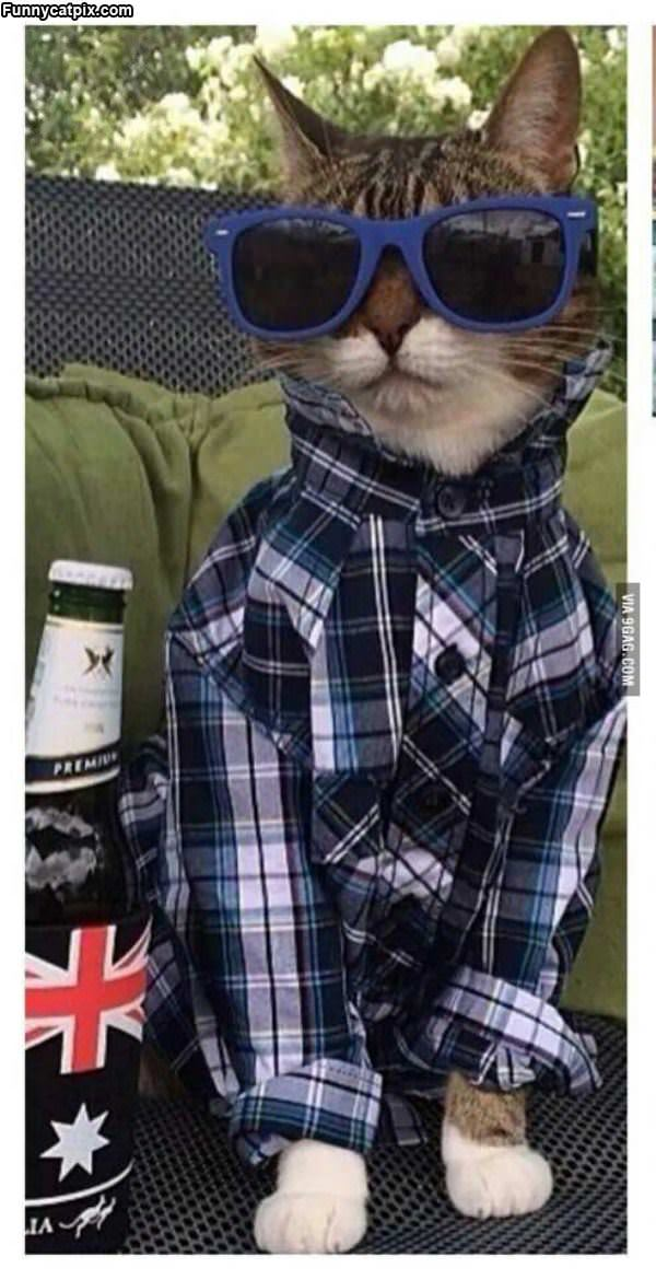 This Cat Is Hip