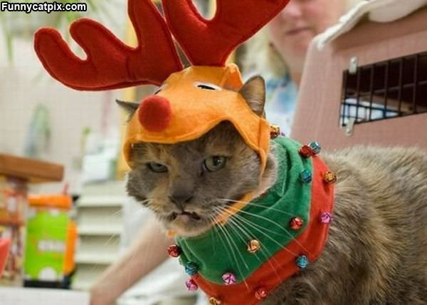 This Cat Is Not Happy