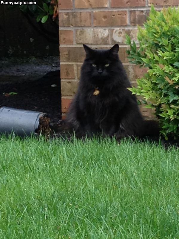 This Cat Is Not Impressed