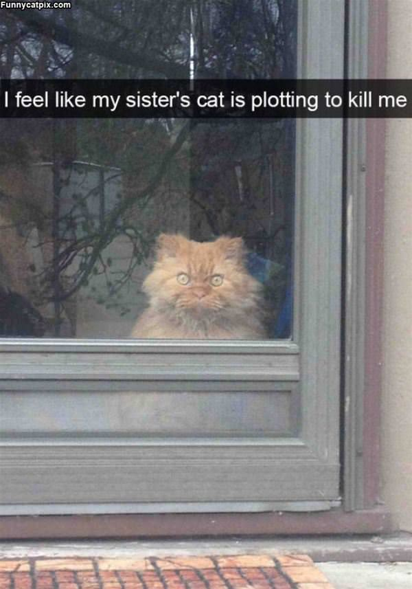 This Cat Is Plotting Something