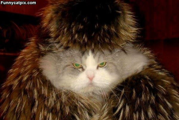 This Cat Is Ready For Winter