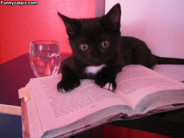 This Cat Reading A Book