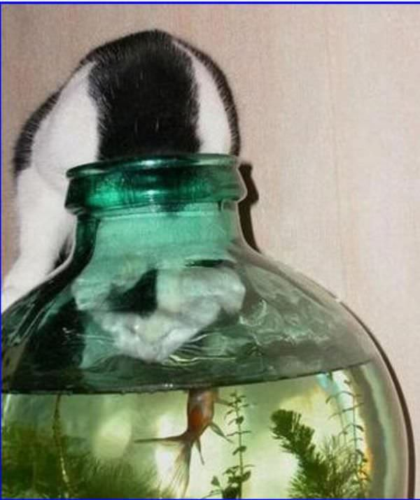 This Cat Wants Fish