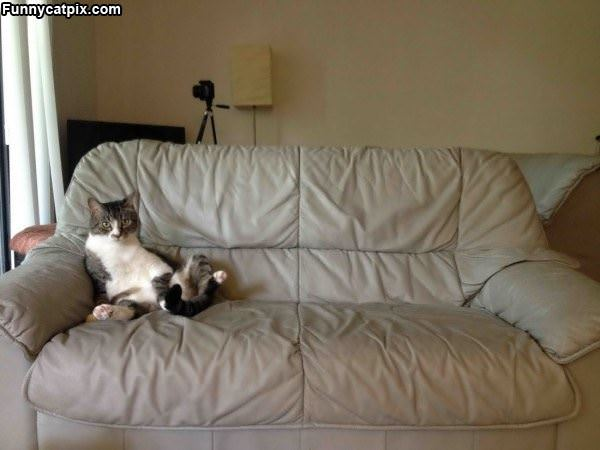 This Couch Is Mine