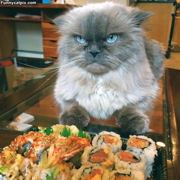 爱国猫不吃日本餐 - 雪山 - .